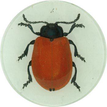 部屋をおしゃれに!マンションで海外インテリア-beetle