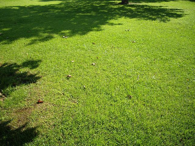 部屋をおしゃれに!マンションで海外インテリア-芝生
