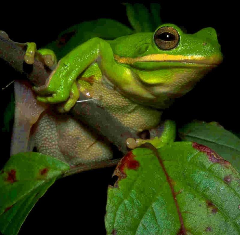 部屋をおしゃれに!マンションで海外インテリア-frog