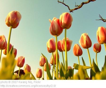 部屋をおしゃれに!マンションで海外インテリア-tulip