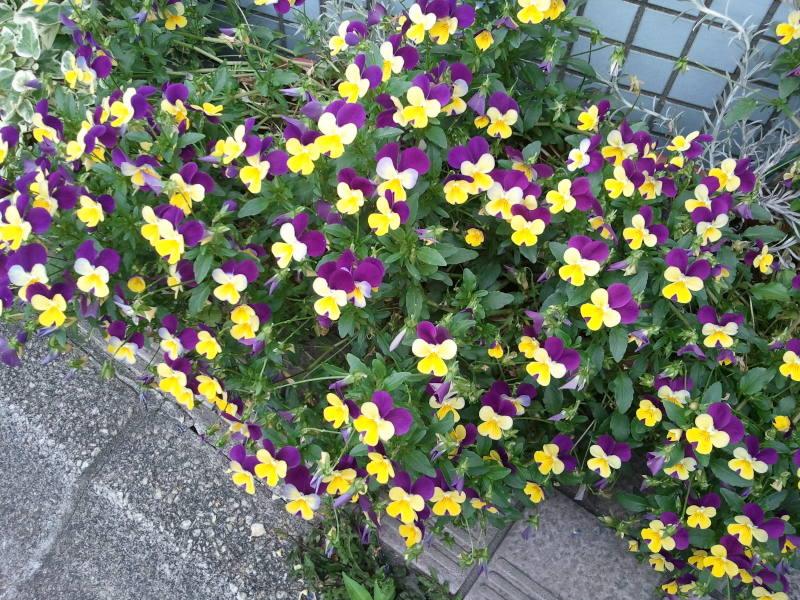 部屋をおしゃれに!マンションで海外インテリア-flower1