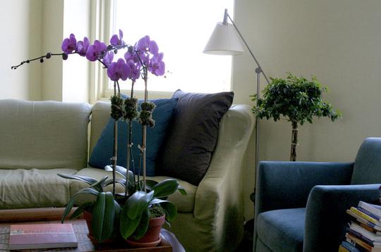部屋をおしゃれに!マンションで海外インテリア-orchid10