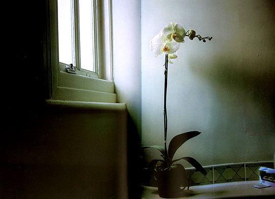 部屋をおしゃれに!マンションで海外インテリア-orchid9
