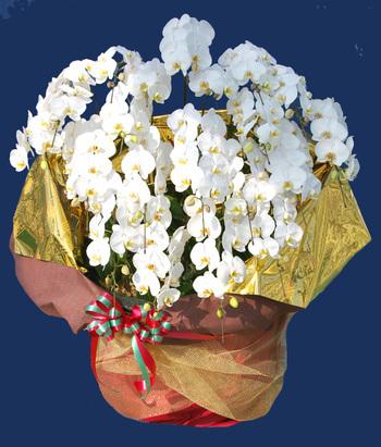 部屋をおしゃれに!マンションで海外インテリア-orchid