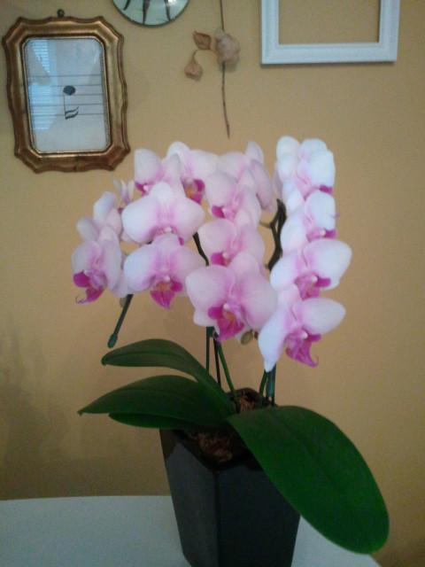 部屋をおしゃれに!マンションで海外インテリア-orchid1