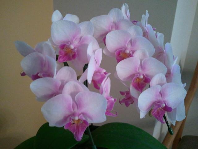 部屋をおしゃれに!マンションで海外インテリア-orchid2
