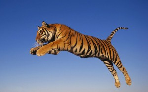 Flying-Tiger-Wallpapers-600x375